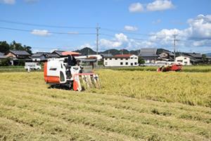稲刈りと稲わらの収穫