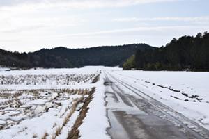 雪に隠れた冬の田んぼ